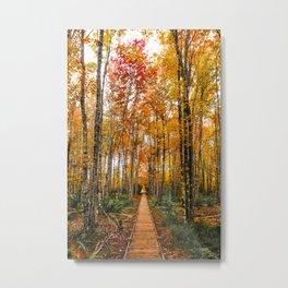 Acadia Autumn Metal Print