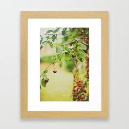 Cherries... Framed Art Print