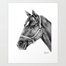 Affirmed (US) Thoroughbred Stallion Art Print