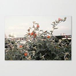 Salmon Flowers against White Canvas Print