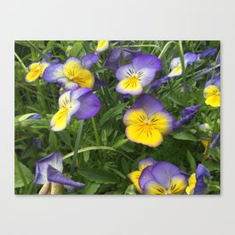 Flower III Canvas Print