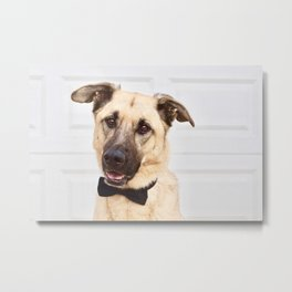 Beautiful rescue dog wearing a bow tie! Metal Print