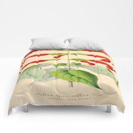 Salvia gesneriflora Vintage Botanical Floral Flower Plant Scientific Illustration Comforters