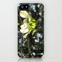 White Dogwood iPhone Case