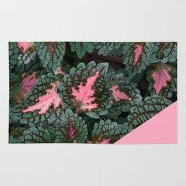 Pink on Coleus Plant Rug