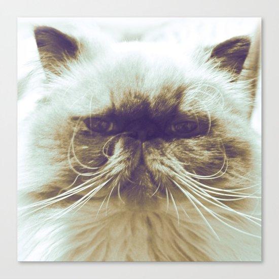 EXOTIC CAT Canvas Print