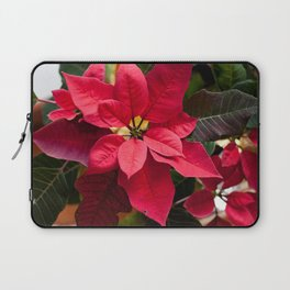 Red and Green Poinsettia Photography Print Laptop Sleeve