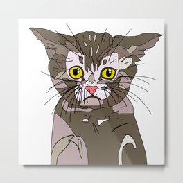 Maine Coon Kitty Metal Print