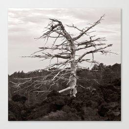 Dead Tree of the Volcano Etna Sicily Canvas Print