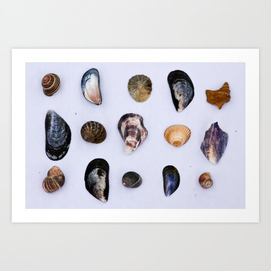 English Seashells Art Print