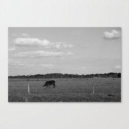 Highway 1 Cow - Florida Canvas Print