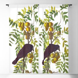 American Crow Vintage Bird Illustration Blackout Curtain