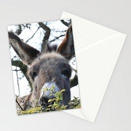Peek-a-boo Donkey Stationery Cards