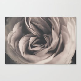 Vintage rose #2 Canvas Print