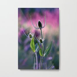Thistle Family in a Fuschia Field Metal Print