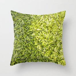 Milkly Oat  Throw Pillow