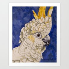 Sulphur Crested Cockatoo Art Print