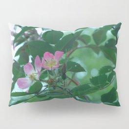 a rose Pillow Sham