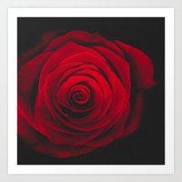 Red rose on black background vintage effect Art Print