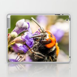 Japanese Giant Hornet, Vespa Mandarinia Japonica, Gathering Flower Pollen, Bee, Insect Macro Photo Laptop & iPad Skin