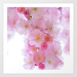 Botanical blush pink white cherry blossom floral Art Print