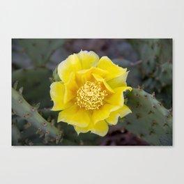 Yellow Cactus Flower 2 Canvas Print