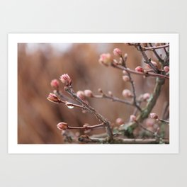 New Life -  Fresh Spring Buds after rain, Rose and earth tones, Nature Photography Macro Art Print