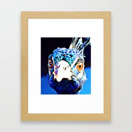 Pippa the Peacock (number 04) Framed Art Print