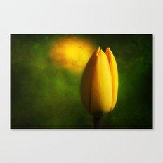 Tulip Hallucinations Canvas Print