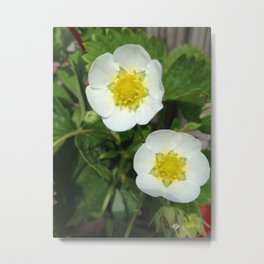 White and Yellow Flower Metal Print