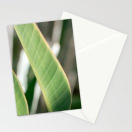 Green art print I Botanical photography print I Curacao nature fine art printI Palm plantI Stationery Cards