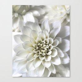 Infinite Petals: Dahlia Flower In White Canvas Print