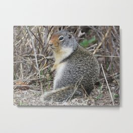 Pensive Squirrel Metal Print
