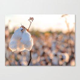 Cotton Field 14 Canvas Print