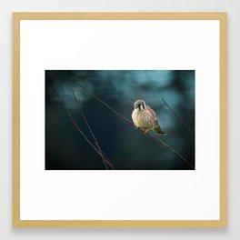 An American Kestrel Perched Framed Art Print