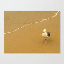 Taking A Walk... Canvas Print