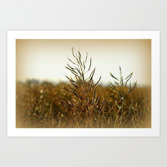 Fields of Oats Art Print