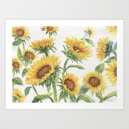 Blooming Sunflowers Art Print