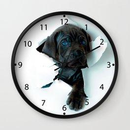 Neapolitan Mastiff black dog  Tearing Through Wall Clock