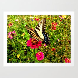 A Summer Butterfly Art Print