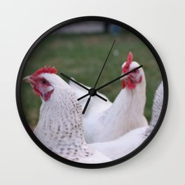 White chickens Wall Clock