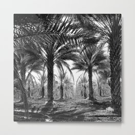 Vintage Palms Trees : Coachela Valley California 1937 Metal Print