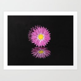 """Reflections"" - Pink Everlasting Flower Art Print"
