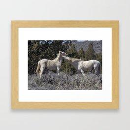 Wild Horses with Playful Spirits No 7 Framed Art Print