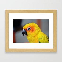 Vibrant Package Framed Art Print
