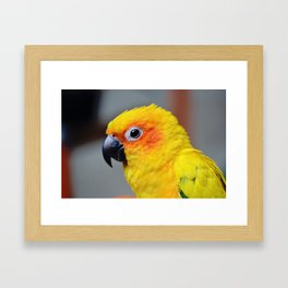Vibrant Package Framed Art Print