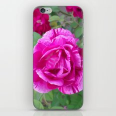 Everlasting  iPhone Skin