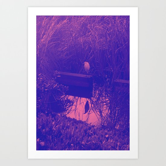 in the reeds Art Print