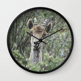 """""""Hello"""". Ibex. Retro wildlife. Wall Clock"""