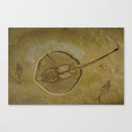 Flat Fish Fossil Canvas Print